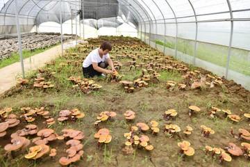 特色食用菌助力精准扶贫