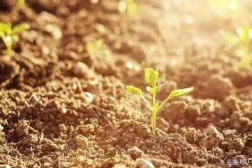"""""""亲土种植""""助力农业可持续发展"""